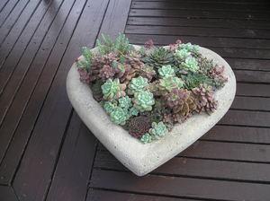 Sat Jun 12 Succulent Heart 3pm